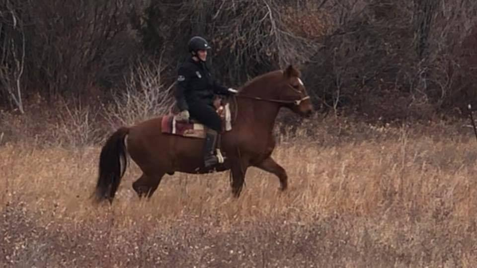 Merlin is a 20 year old registered, 14.2 hand, stout, Paso Fino gelding. He has been a trail horse his whole life and will go out on the trail alone or with others and never question a thing. He is brave out there and still likes to cover country.