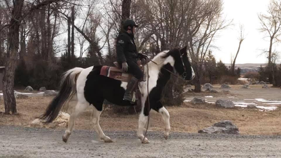 Skye is a 14.2 hand stout registered 14 year old Foxtrotter mare. She has been a trail horse her whole life and knows the job. She goes wherever you point her out alone or with others. She has a nice big walk.