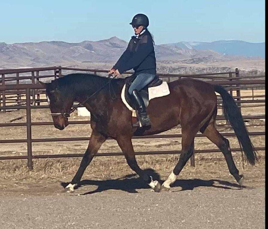 Double O Seven (Duke) is a stunning 17 hand, 11 year old, Oldenburg gelding that is papered and microchipped and sired by Dacaprio. Duke was started late in life so has low miles. He has stunning movement and will be a fantastic dressage horse.