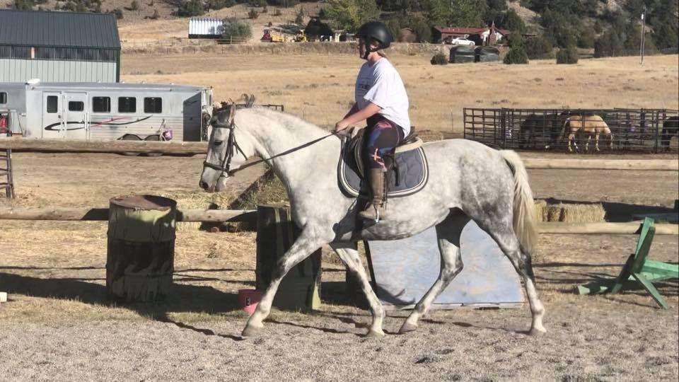 My Evalina is a 15.3 registered Oldenburg mare sired by Coco Cavalli, she is microchipped. She got a late start to her training and at 8 is doing great under saddle with low miles. She has wonderful manners, is very kind, stands tied.