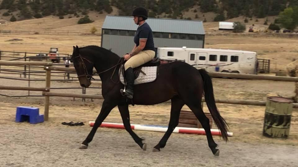Mali is a 16 hand, 1/2 Friesian and 1/2 Oldenburg filly. She is registered as a Friesian Heritage Sporthorse. Mali is very easy to catch and adores people and attention. More like feels she is very deserving of your undying love and affection.
